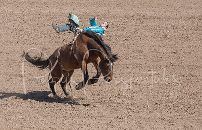 Tucson Rodeo 2015