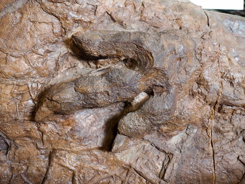Dinosaur track in Utah