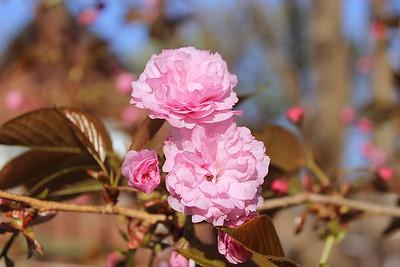 Springtime at Thistlebright 2012