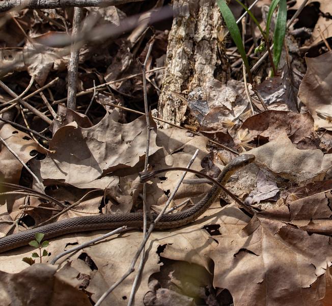 snake 041319-3.jpg