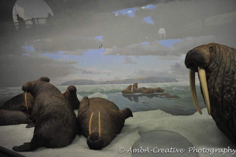 2013-12-30_AMNHMuseum@NewYorkNY_77.jpg