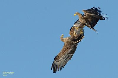 WT Eagles Poland 2013