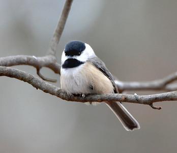 2016 xmas birds