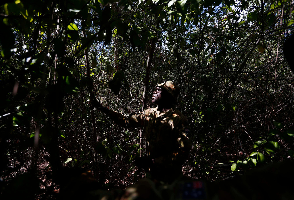. Lance-corporal Vinnie Rami, an indigenous soldier from Australia\'s North West Mobile Force (NORFORCE) unit, holds a \'spear tree\' after finding it during a surveillance and reconnaissance patrol around Astell Island, part of the English Company Islands, located inside Arnhem Land in the Northern Territory July 17, 2013. NORFORCE is a surveillance unit that employs ancient Aboriginal skills to help in the seemingly impossible task of patrolling the country\'s vast northwest coast. NORFORCE\'s area of operations is about 1.8 million square km (700,000 square miles), covering the Northern Territory and the north of Western Australia. Aboriginal reservists make up a large proportion of the 600-strong unit, and bring to bear their knowledge of the land and the food it can provide. Fish, shellfish, turtle eggs and even insects supplement rations during the patrol, which is on the lookout for illegal foreign fishing vessels and drug smugglers, as well as people smugglers from neighboring Indonesia. Picture taken July 17, 2013. REUTERS/David Gray