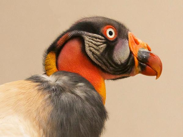 GALLERY | Birds
