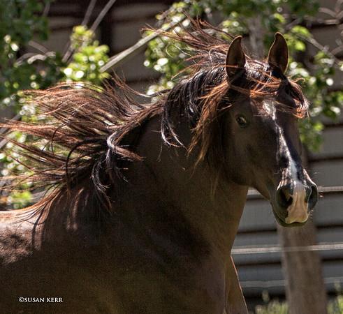 Horses & Equestrian Events