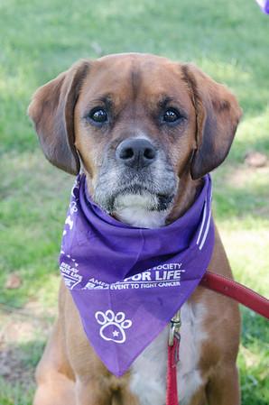 Bark for Life Calendar Pics