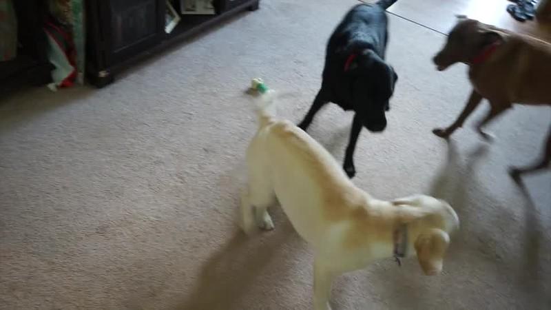 Winnie Training Video 1