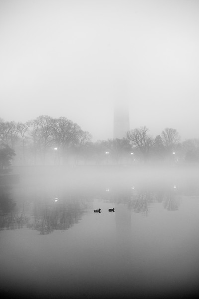 foggyducks.jpg