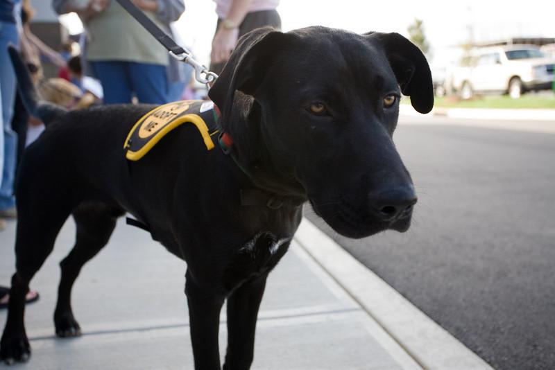 Petsmart_Puppies_RLoken_003_9012.jpg