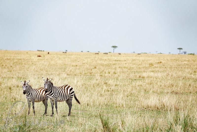 Safari-2ofaKind-023.jpg