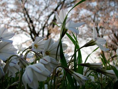 京都鴨川公園
