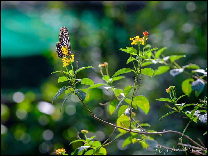 200104 KL Butterfly Park 31.jpg