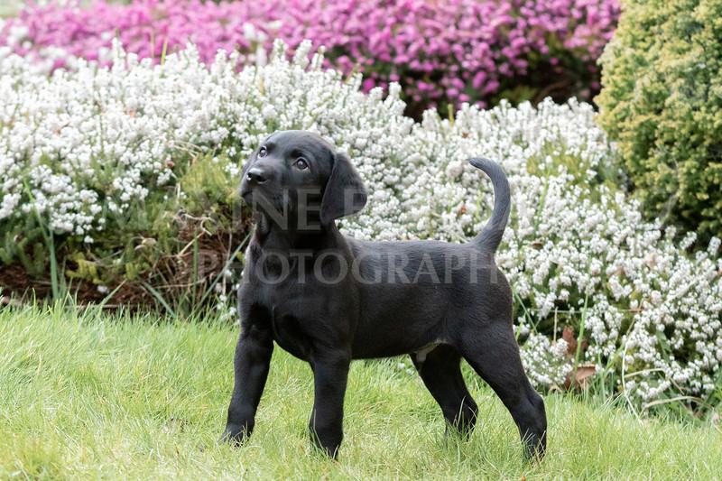 Weika Puppies 24 March 2019-6475.jpg