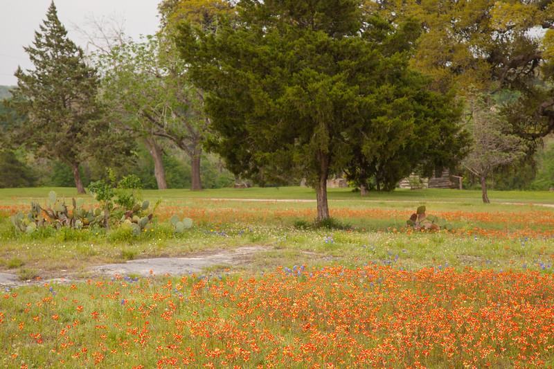 2015_4_3 Texas Wildflowers-8191.jpg