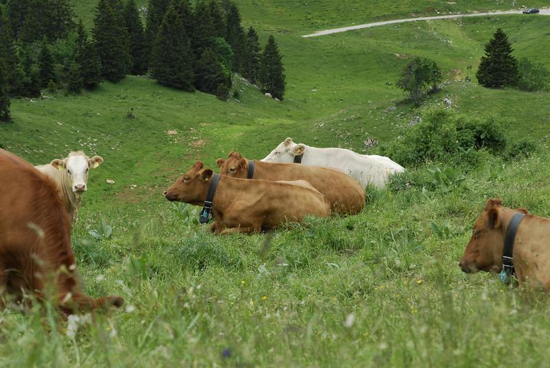 070626 7143 Switzerland - Geneva - Downtown Hiking Nyon David _E _L ~E ~L.JPG