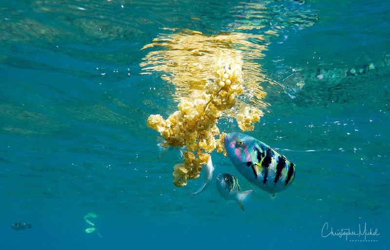 091015_underwater_5177.jpg