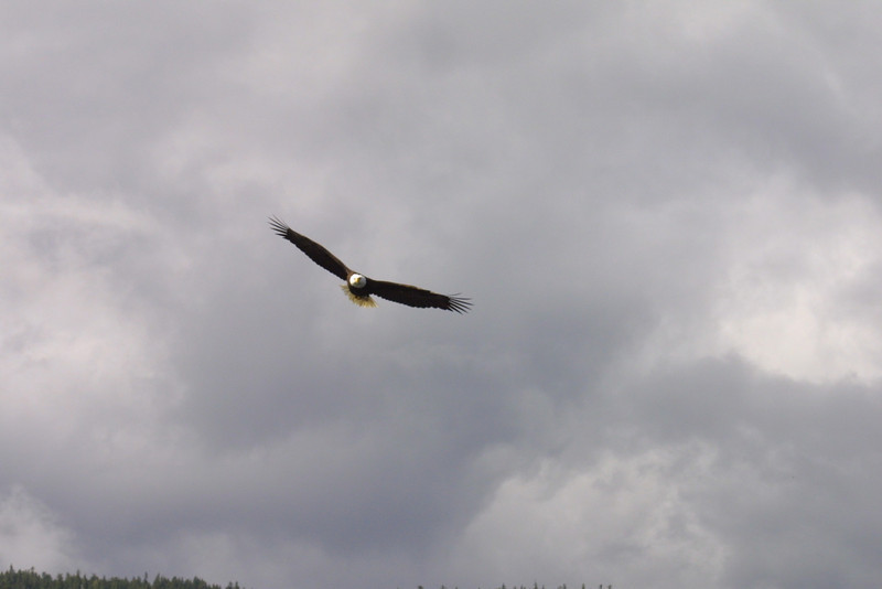 eagles from disc 013.jpg