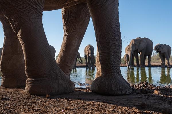 Mashatu, Botswana,  2018