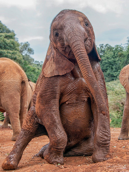 Aug312013_nairobid_blixen_elephant_2349.jpg