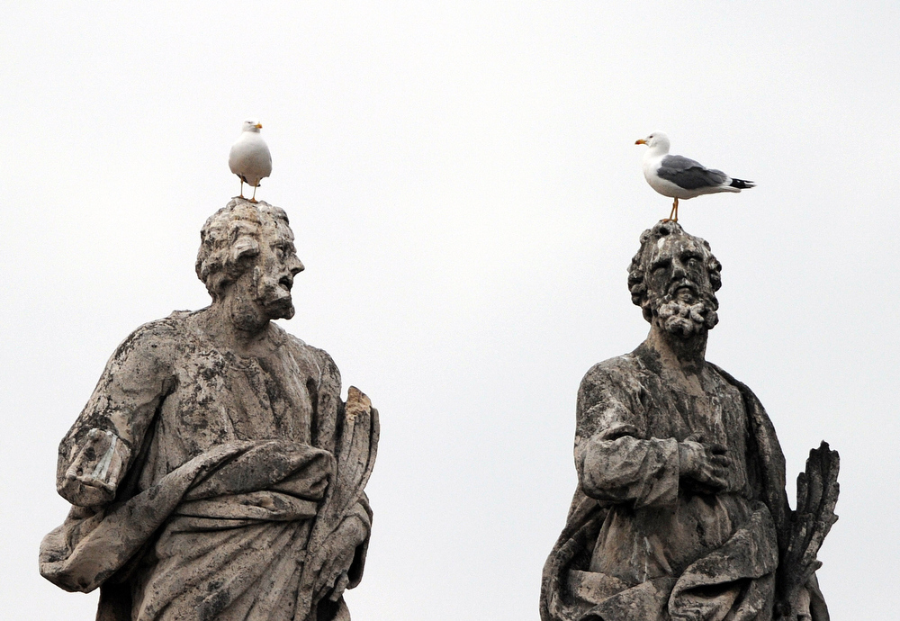 . Seagulls stand on statues in St. Peter\'s square at The Vatican before the Angelus prayer on January 29, 2012.  AFP PHOTO / GABRIEL BOUYS