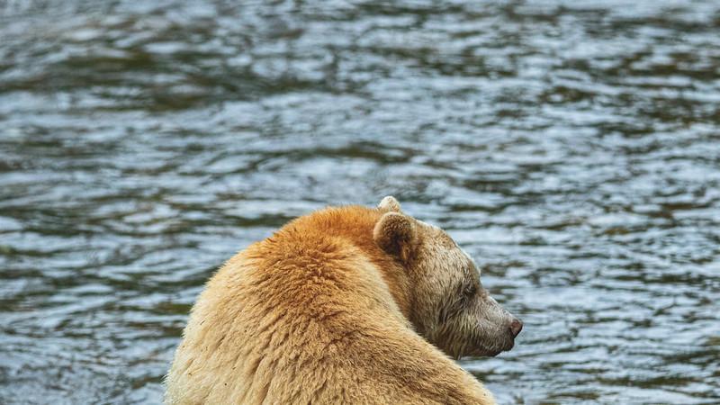 White Bear at Riordan Creek September 2019-4.jpg