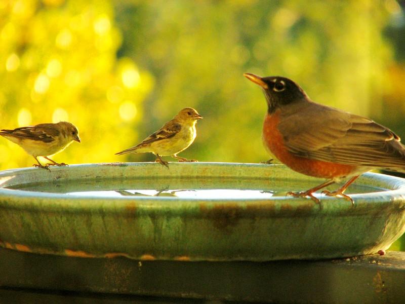 birds (175).jpg