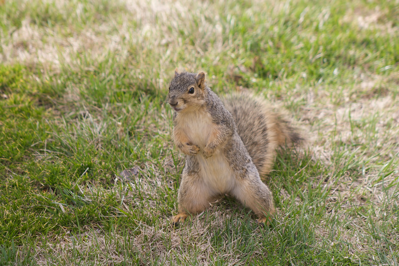 Sassy squirrel