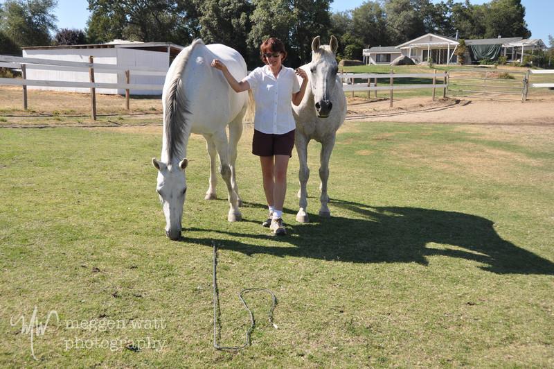 EB&Horses-166.jpg