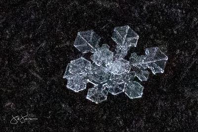 snowflakes-1762.jpg