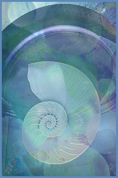 Shell Dream - Judith Sparhawk