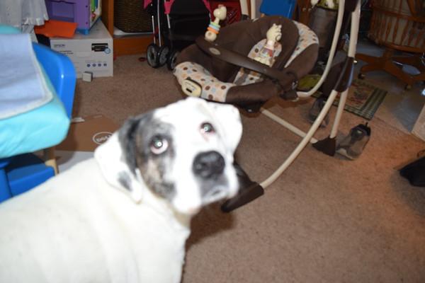 Goodbye Amber Dog