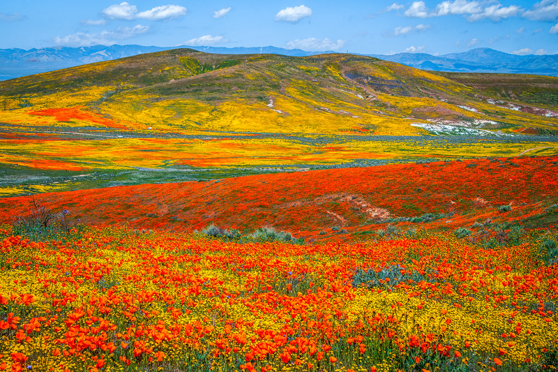 Spring Symphony Antelope Valley Magnum Opus #3: Antelope Valley Poppy Reserve Wildflowers Superbloom Fine Art Landscape Nature Photography: California Fine Art Landscape Nature Photography
