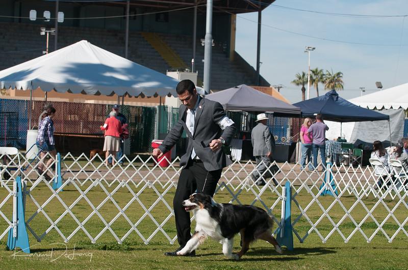 20170205_Australian Shepherds_Lost Dutchman Kennel Club-108.jpg