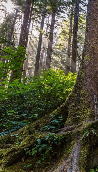 woodsunFS