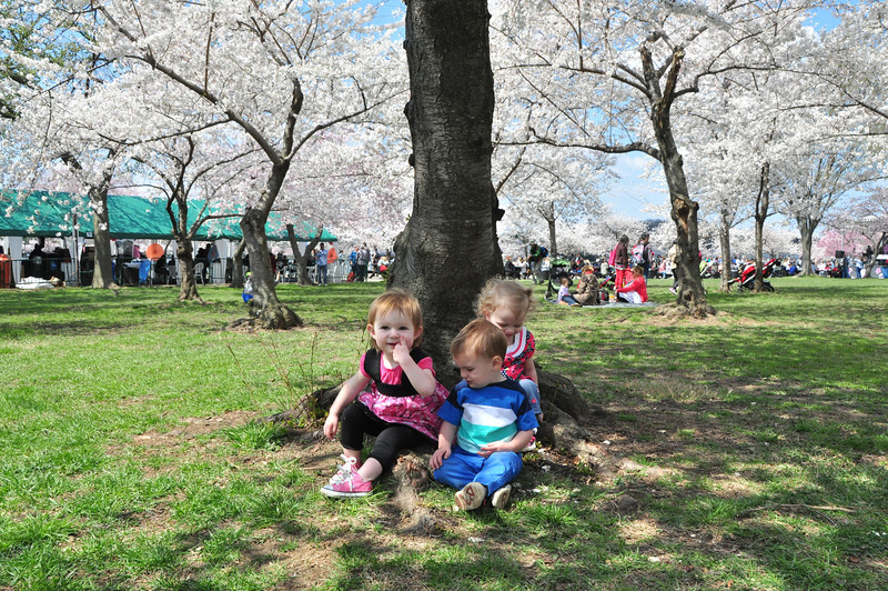 Cherry Blossoms 2014 096.jpg