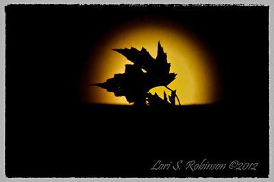 Moons of Wilton
