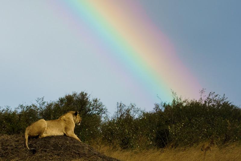 Kenya 2015-04844.jpg