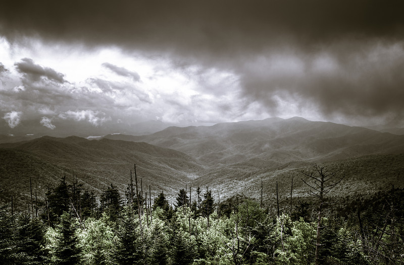 """Landscape in the Great Smoky Mountains, Tennessee, USA.    See the dead trees??  Eastern hemlock trees are some of the largest and most common trees in the Great Smoky Mountains. They play an ecologically vital role in cooling mountain streams and providing habitat for many other species. Unfortunately, they are under attack from a non-native insect called the hemlock woolly adelgid (Adelges tsugae). Without successful intervention, the hemlock woolly adelgid is likely to kill most of the hemlock trees in the park.  Called the """"redwood of the east,"""" eastern hemlocks (Tsuga canadensis) can grow more than 150 feet tall on trunks measuring six feet in diameter. Some hemlocks in the park are over 500 years old.  Over 800 acres of old-growth hemlock trees grow in the Smokies-more than in any other national park. Younger hemlock forests of 75-100 years in age cover an additional 90,000 acres of land in the park. Originally discovered here in 2002, adelgid infestations have now spread throughout the park's hemlock forests. In many areas infested trees have now died.  Since its arrival in the U.S. in the 1920s the hemlock woolly adelgid has rapidly colonized parts of New England and the Mid-Atlantic States, where it feeds on eastern hemlock. In the south, it also feeds on Carolina hemlock. The insect is easily dispersed by birds and wind but travels most rapidly as a hitchhiker on infested horticultural material."""