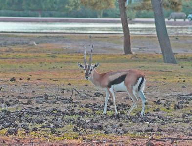 Ramat Gan Safari - March 2021