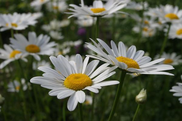 Flowers_060510_0014.JPG