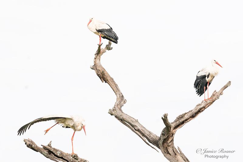 Stork Yoga
