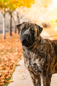 20170116_Butcher_El Mounstro_Mastiff-11-Edit_FB