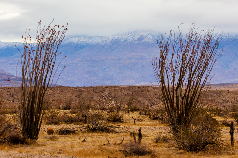 Snow Capped Mountains In the Background and Desert Landscape In the Foreground.