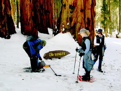 Sequoia Snowshoe2008