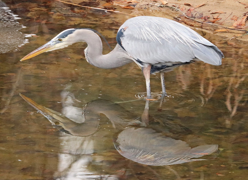 Heron reflection 2a