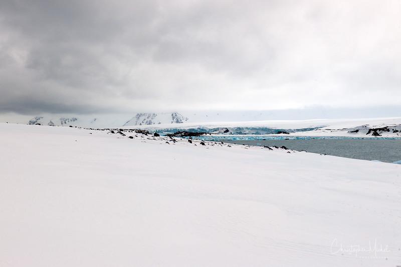 091204_penguin_island_7778.jpg