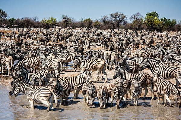 Namibia Photo Safari - Etosha National Park