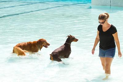 Dog Days of September 2012