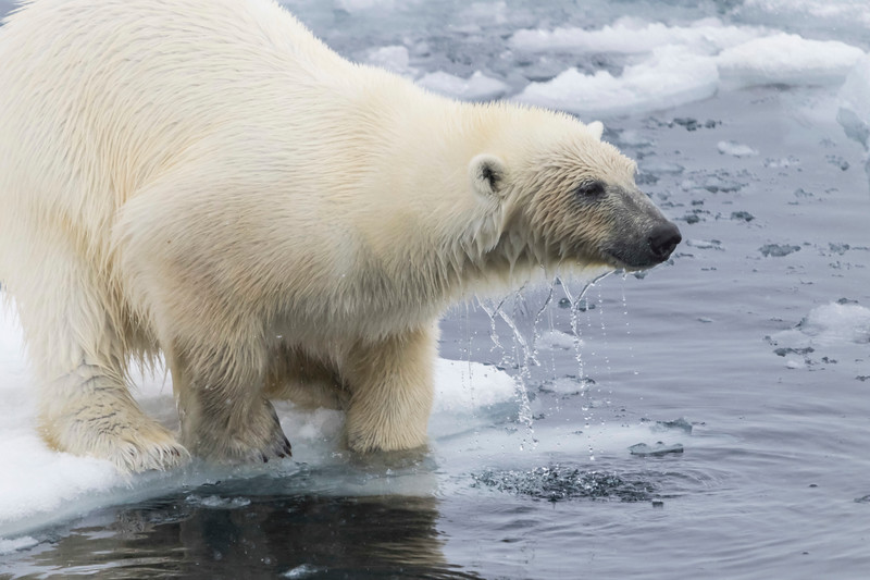 Inspirato-Arctic_Expedition18-04-Russebukta-1468.jpg